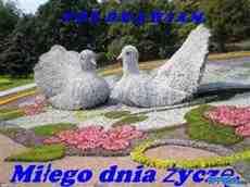 DziaLka na sprzedaz Wroclaw Kloda